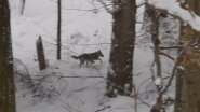 Встреча с волком в лесу #1 Вести из леса 10.02.18