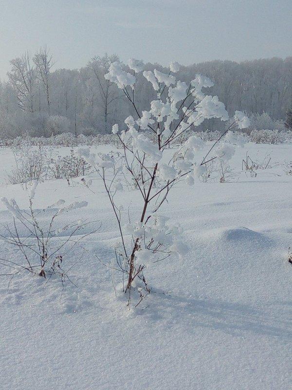 Зимний фейерверк.