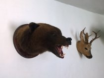Голова медведя на медальоне