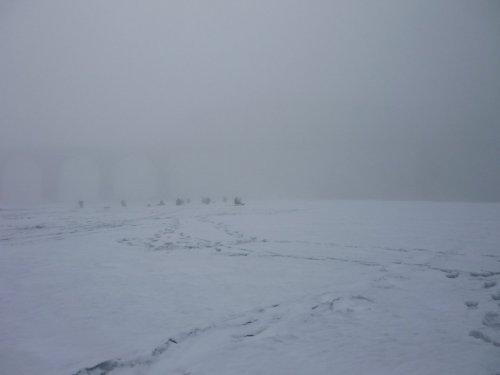 """""""пингвины"""" в тумане........."""