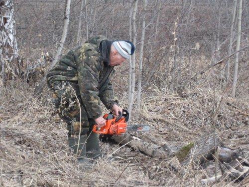 старые поваленные деревья пилим)для разагрева еды