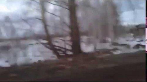 Массовая вырубка леса Китаем в Томской области
