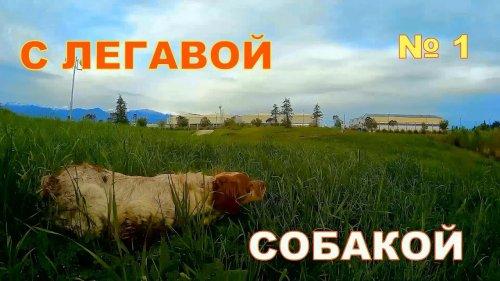 С Легавой собакой № 1