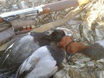 Тщательная подготовка к сезону охоты , залог успешной охоты