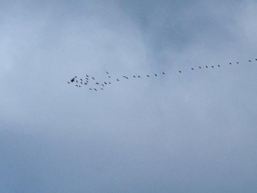 Летят.