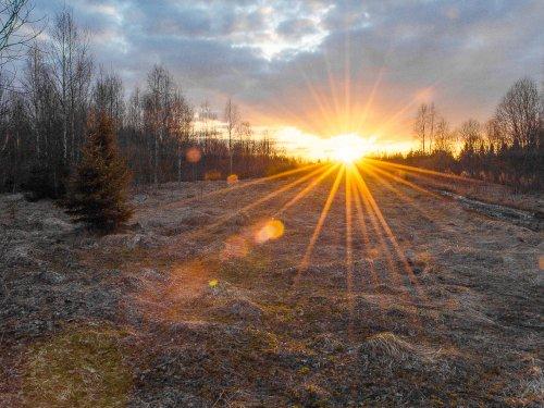Теплые лучи солнца на вальдшнепинной тяге.