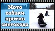 Мотособаки против снегохода. Мотобуксировщики БТС с лыжным модулем и модулем толкачём против снегохода Ирбис Динго в глубоком снегу.