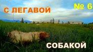 С легавой собакой № 6