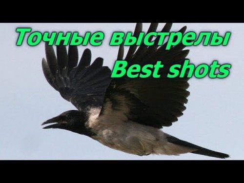 Почему мы стреляем серую ворону.Точные выстрелы.