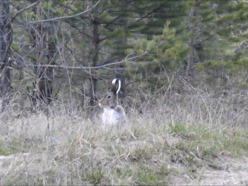Охота с подхода на зайцев