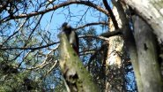 Звуки весеннего леса