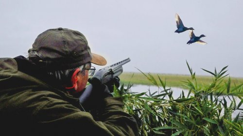 Охота на уток, подборка лучших моментов / Duck hunting...