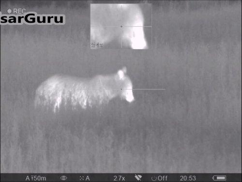 Выстрел по медведю с тепловизионным прицелом Pulsar Trail