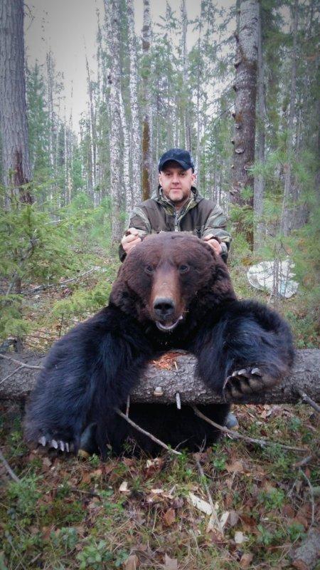 "Медведь ""весна"" 2018."