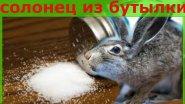Солонцы для зайца