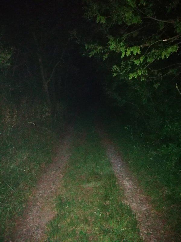 Лесная дорога к реке ночью.