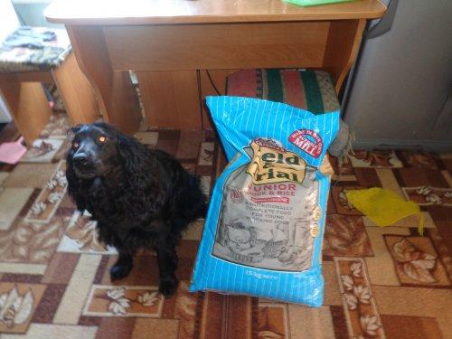 Отчёт об использовании сухого корма Field&Trail Junior Duck and Rice.