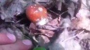 Белые грибочки открытие сезона тихой охоты!