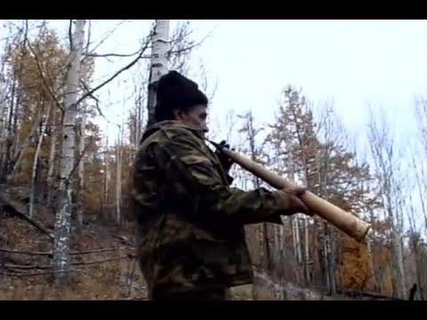 Охота на изюбря в горах Бурятии