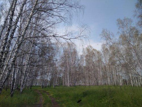 Зимний лес летом:(