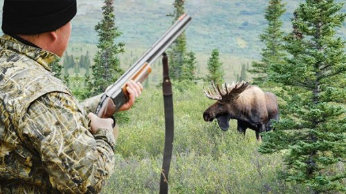 Охотничье хозяйство - Беркут-С - На лося