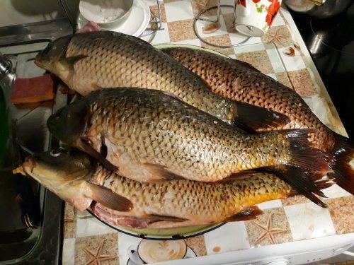 результат рыбалки