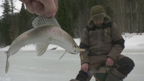 Охота на рыбалку. Ловля хариуса зимой.