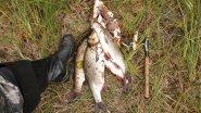 Рыбалка на