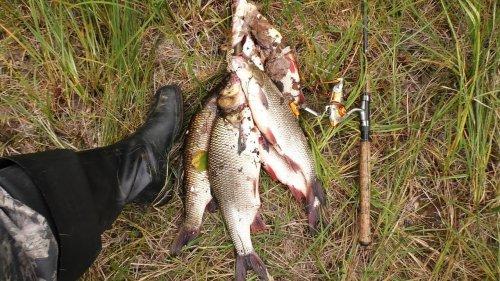 "Рыбалка на ""вертушку""."