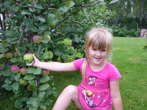 Мелкий охотник на ещё не спелые яблоки.....