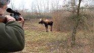 Охота на лося с вышки