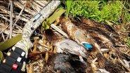 Первая удачная охота после открытия 2018 МЦ-21-12.Охота на утку с манками и чучелами.