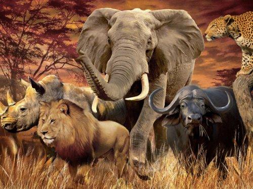 Мы ждём открытия, а в Африке охота 9 месяцев в году