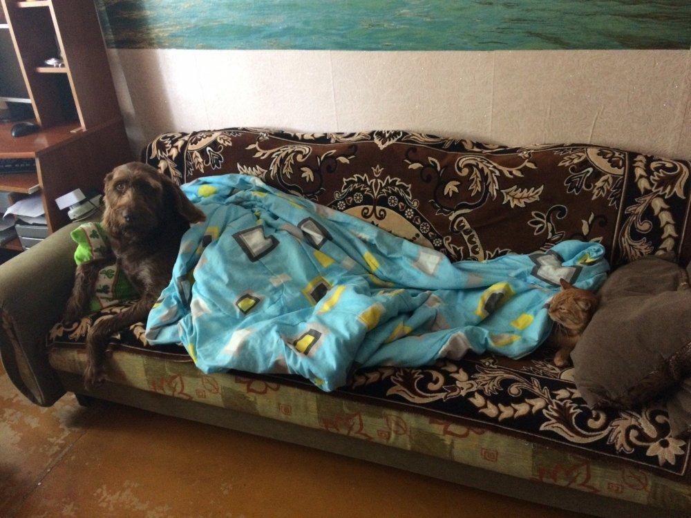 Наши диванные стены семьи