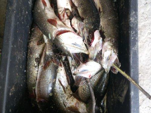 По рыбачил