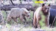 Доигрались.. Медведица напала на охотников
