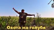 СКОРО на канале  Открытие охоты продолжение Часть № 2  Голубь