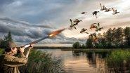 Охота на утку осенью