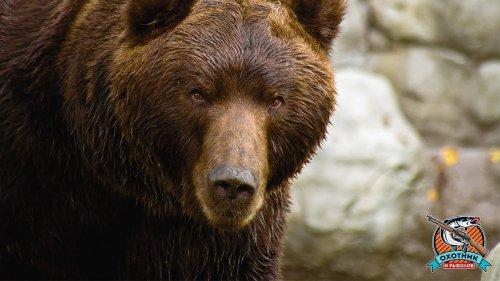 Медведица подошла слишком близко
