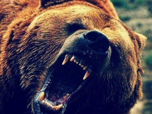 Медведи проголодались не на шутку