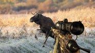 Загонная охота на лося. Точный выстрел
