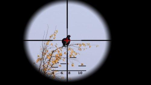 Выстрел по тетереву на 80 метров