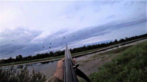 Утиная охота с подхода и на вечере. Настрелял уток в лет. Ружье МР-155.