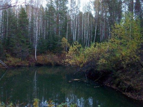 Маленькая таежная речка