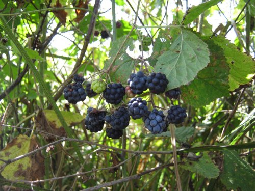 Вот такой урожай))))