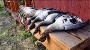 Охота на гуся осенью (Удачные выходные)