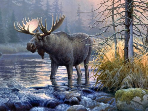 В Новосибирской области состоялось проведение случайной выборки по распределению разрешений на добычу лося и косули сибирской.