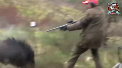 Атака кабана на охотника