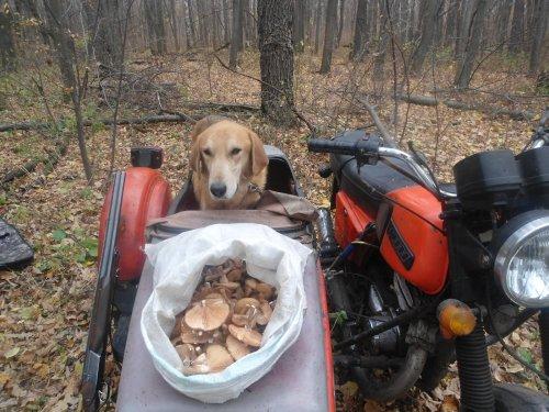 Поехали уже ,туда где зайцы а не грибы.