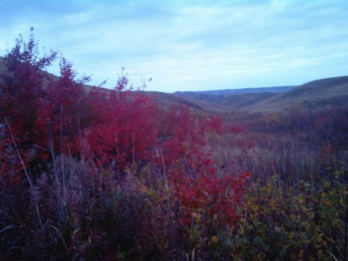 Осень... Распадки степных предгорий в предрассветных сумерках.